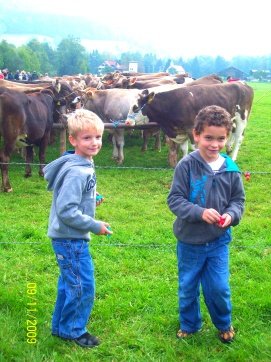 #Germany, #Bavaria, #cattle drive, #Viescheid, #festival, #tradition