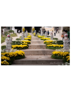 travel photographer, bondgirlphotos, flowers, Bongeunsa, Temple, Gangnam, Seoul, Korea