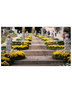 travel photographer, bondgirlphotos, flowers, Bongeunsa, Temple, Gangnam, Seoul, Korea