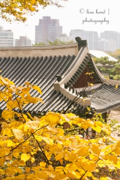 seoul, palace, autumn, korea