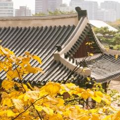 seoul, palace, autumn, korea