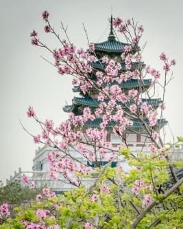 Last Memory Korea Hanbok Tour-192