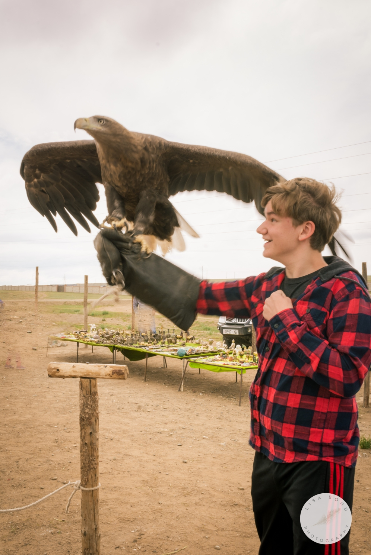 Mongolia eagle