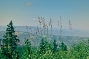 mummelsee, black forest