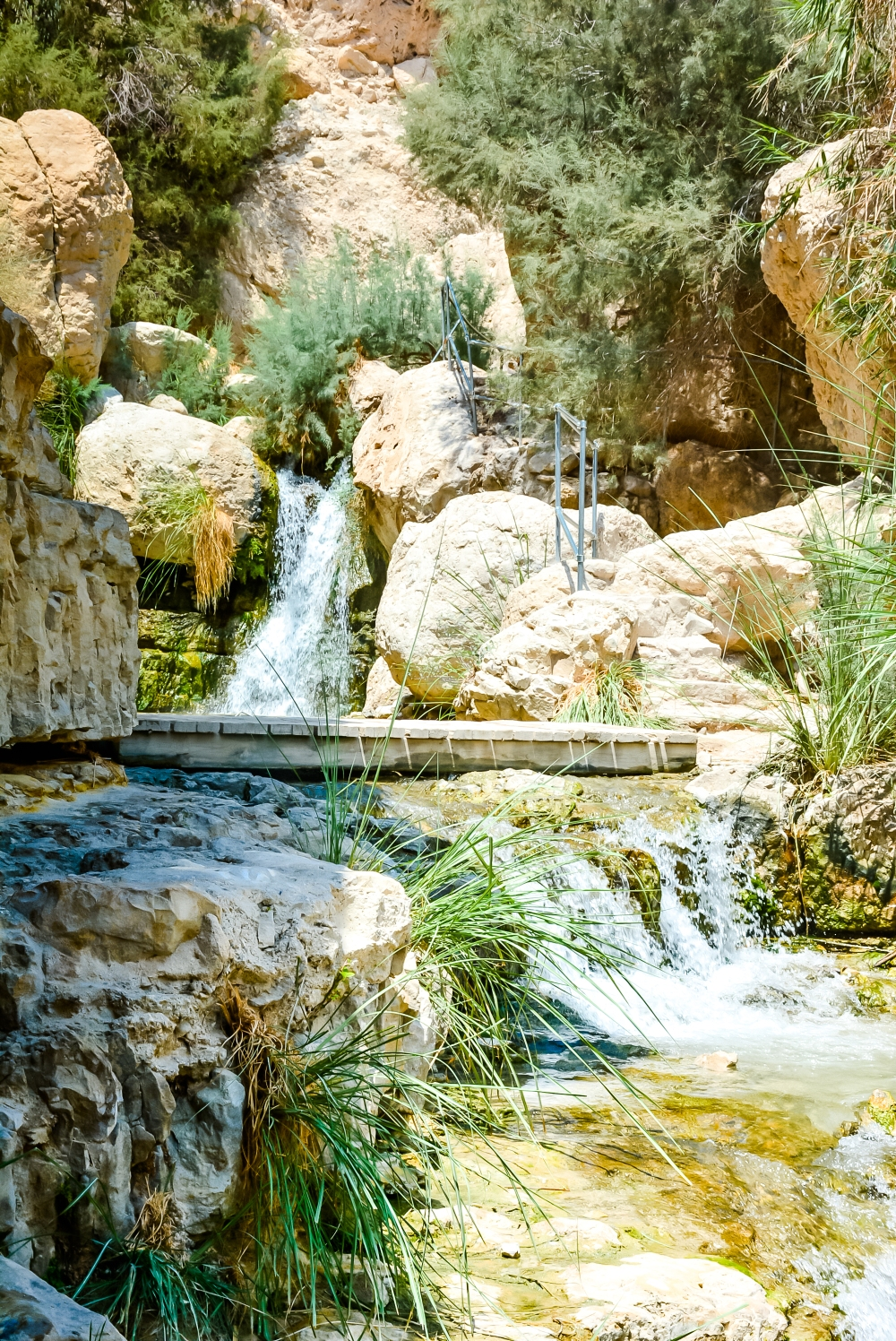 En Gedi, nature, Israel, Judaen desert